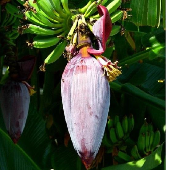 Tasty Spicy Banana Flower Bhaji