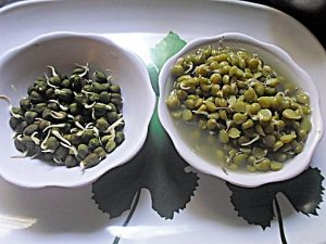 Sprouted Sabut Kala Chana