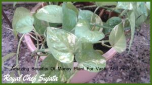 Amazing Benefits Of Money Plant For Vastu And Finance