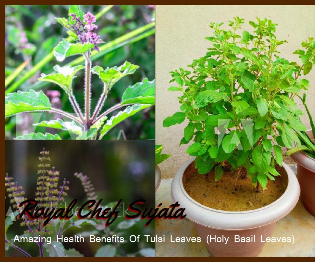Amazing Health Benefits Of Tulsi Leaves (Holy Basil Leaves)