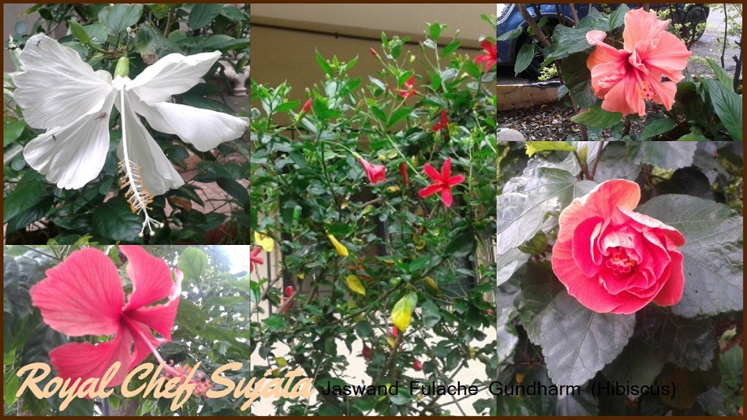 Jaswand Fulache Gundharm (Hibiscus) In Marathi