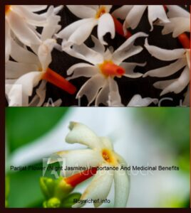 Parijat Flower (Night Jasmine) Importance And Medicinal Benefits In Marathi